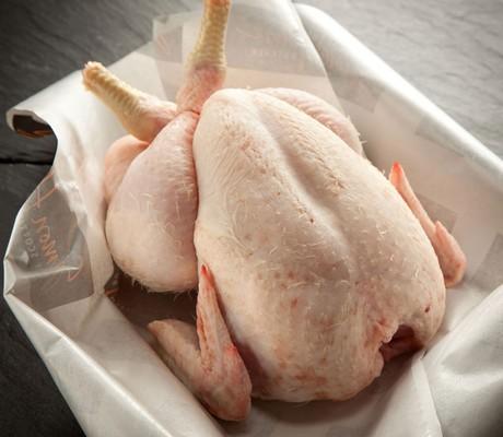 Мясо молодой курицы